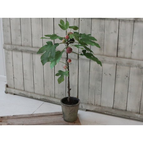 Fig Tree w. old flowerpot