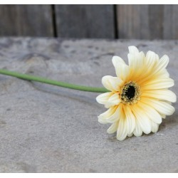 Kwiaty Sztuczne Chic Antique Gerbera B