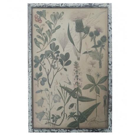 Obraz Vintage Chic z Roślinami B