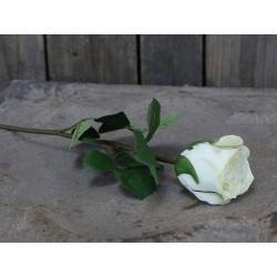 Fleur Rose (S19)