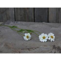 Fleur Wildflower (S19)