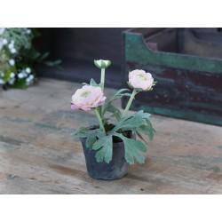 Fleur Ranunculus (S19) in ceramic pot