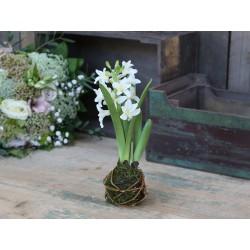 Fleur Hyacinth (S19) flower