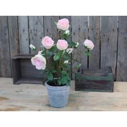 Fleur Rose (S19) in old ceramic pot