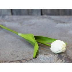 Fleur Tulip
