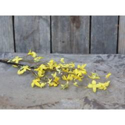 Fleur Forsythia