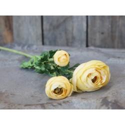 Fleur Ranunculus