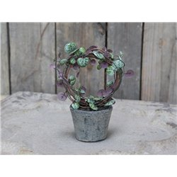 Fleur Heartvine in pot