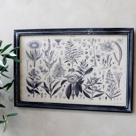 Obraz z Gatunkami Roślin Chic Antique B