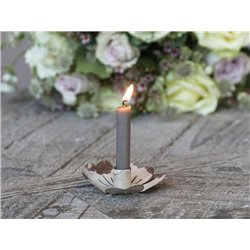Candlestick flower  f. taper candle