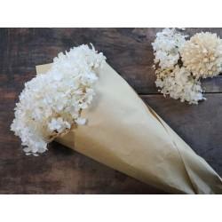 Fleur dried Hydrangea Flower