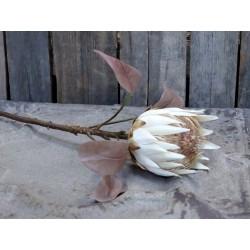 Fleur Protea Flower