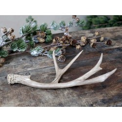 Antler for deco