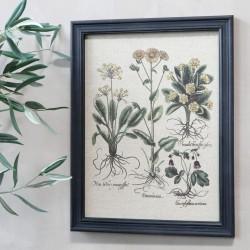 Obraz z Roślinami i Łacińskimi Podpisami Chic Antique A